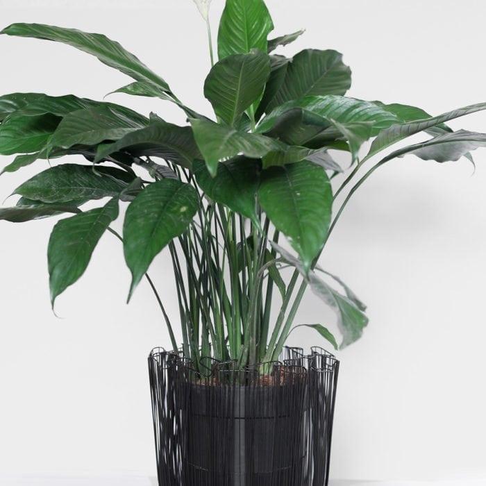 planter-5