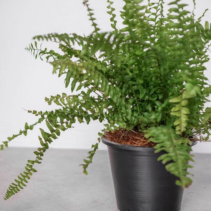 tierra-plants-indoor-10