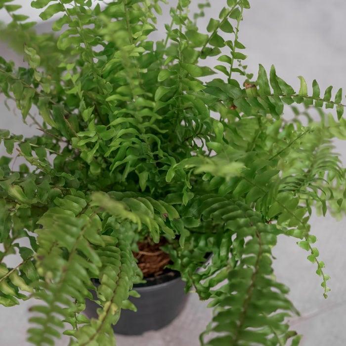 tierra-plants-indoor-6
